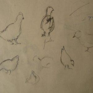 Étude 1, poules