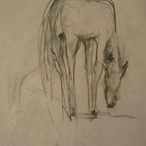 Étude 7, cheval