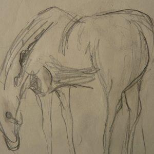 Étude 1, cheval