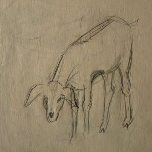 Étude 1, chèvre