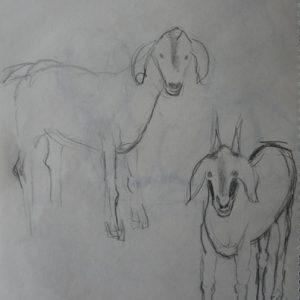 Étude 2, chèvres
