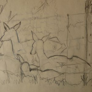 Chevreuils dans un enclos