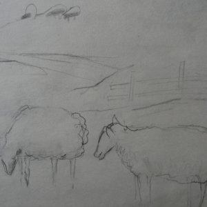 Étude 1, moutons