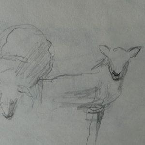 Étude 2, moutons