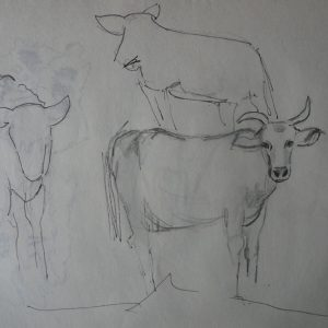Étude 1, vaches