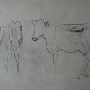 Étude 2, vaches